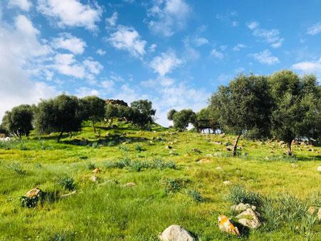 Una foto della collina del Nuraghe Sirai scattata durante una tappa del Cammino di Santa Barbara.