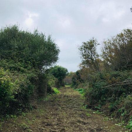 Una foto di un sentiero particolarmente evocativo durante la tappa da Carbonia a Nuraxi Figus del Cammino di Santa Barbara.
